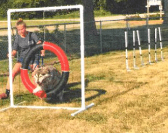 M19-PAC-Ext-Dog-Agility-Equip-2